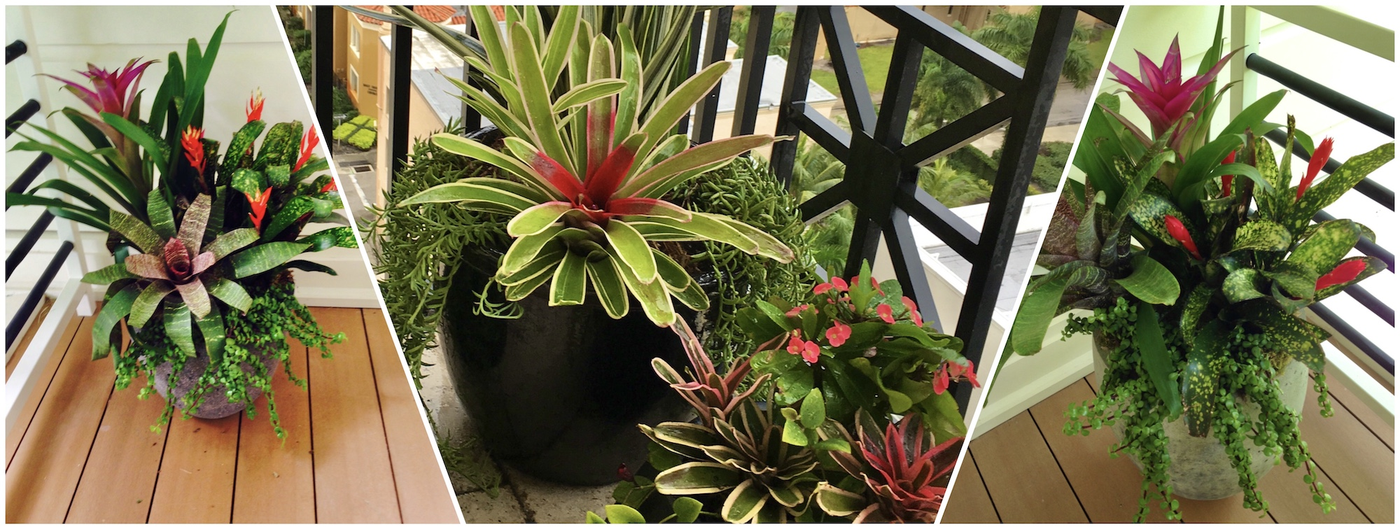 Outdoor Floral and Plant Decor Service - West Palm Beach, FL Velene's Floral