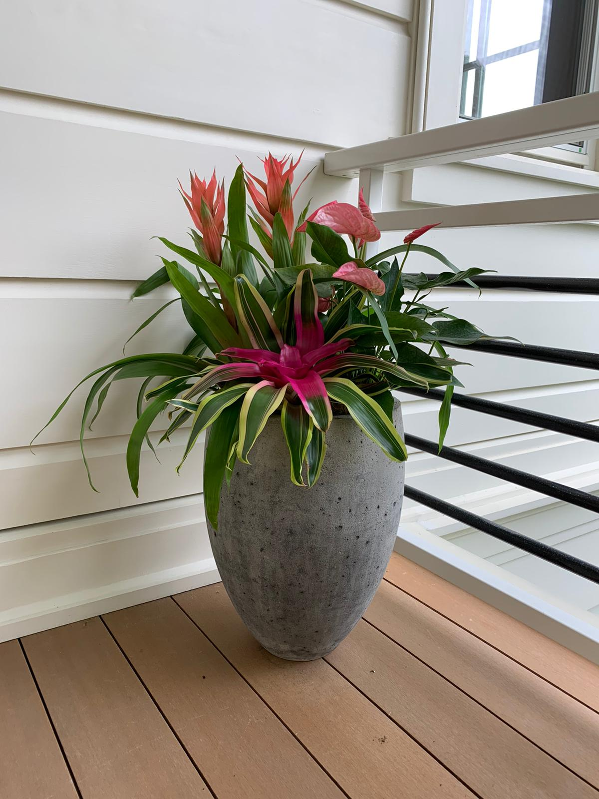 Beautiful Pink Bromeliad paired with Pink Lillies Velene's Floral