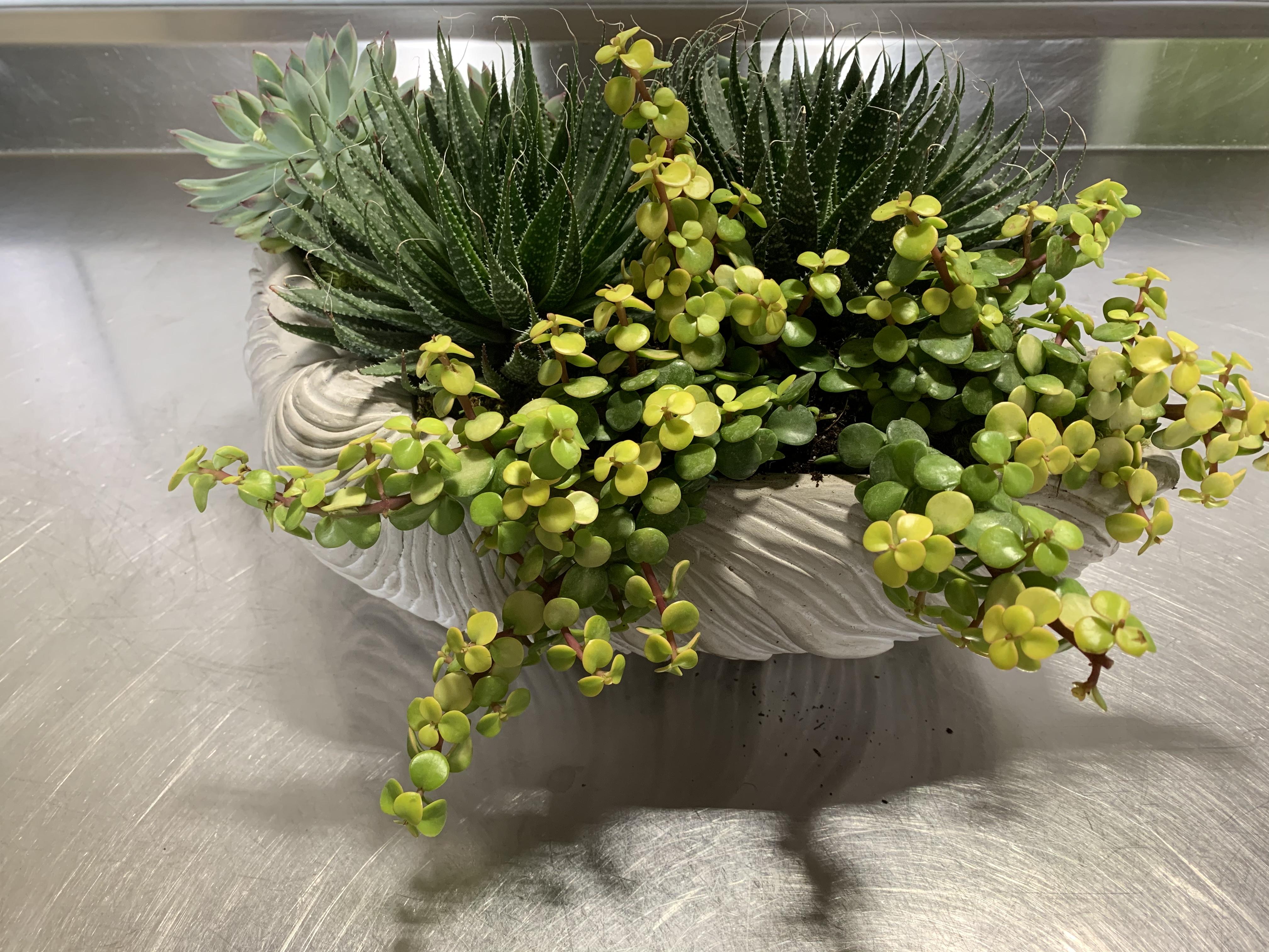 Variety of Succulents Velene's Floral